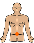sacral chakra position on the body